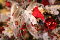 https://admin.acornhomeandgarden.com/uploads/thumbnail_Acorn_Christmas2019_8109_c623bf09e2.jpg